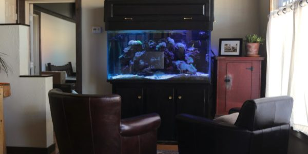 len walker law office waiting area with aquarium